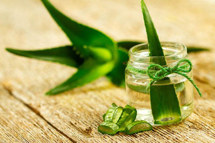 Aloe vera esa planta de propiedades maravillosas tu blog de productos de belleza - Planta de aloe vera precio ...